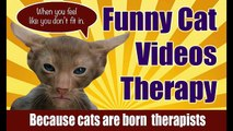 Cats Meowing Compilation Of Cats Meowing Funny _ Funny Cat Videos Therapy-copypasteads.com