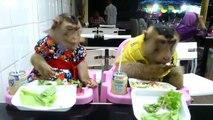 Des singes dressés prennent leur repas à table