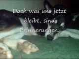 Zur Erinnerung an unseren Hund Schaila
