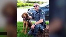 Beloved Police Dog Died After Being Locked In Patrol Car For Hours