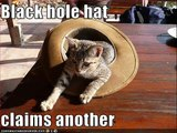 LOLCats in All Fired Up lol Cats Rock Funny Cats