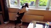 Certains chats et chiens ne font pas bon ménage, ce sera des instants de fou rire garanti