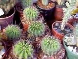 Si te gustan los cactus o cactos pasá por acá