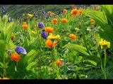 Sokolov - Schumann Fantasie op.17 I,II,III.wmv
