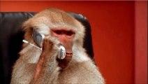 Ce singe est simplement incroyable, regardez de quoi il est capable.