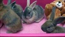 4 Weeks Old Baby Bunnies