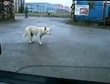 Crazy dog move and dance for a music | funny dog | funny animals | funny pets video of dogs
