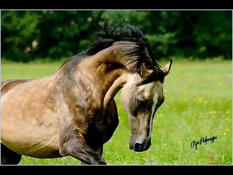 energy horses