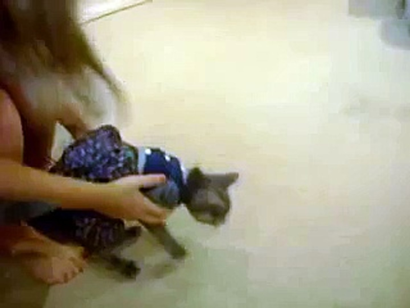 cat with clothes on