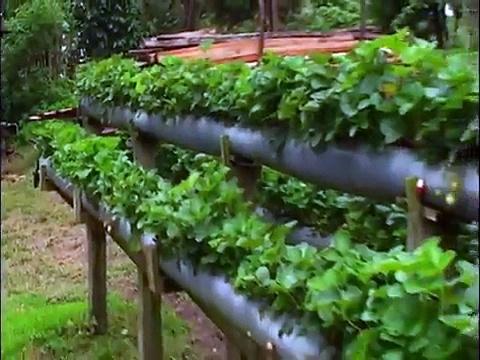 Ostuma Farms