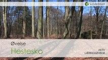 Lindeblad - Aktiv Læring - Hestesko
