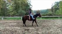 Équitation éthologique en Europe: En Selle - Seat-stop