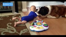 Funny Babies Funny Videos Funny Fails 2015