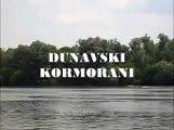 Dunavski kormorani