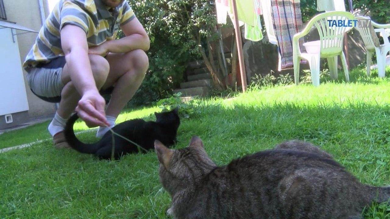 Postihnuté mačky sa len bezmocne prevaľovali. Naučila ich chodiť