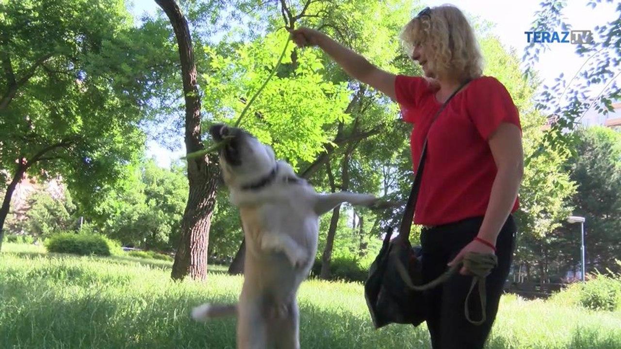 Zachránila psa od narkomana