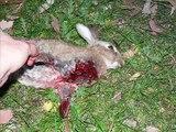 Run rabbit RUN AWAY!