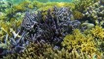 SEA TURTLES FreeDiving - Gili Islands, Indonesia