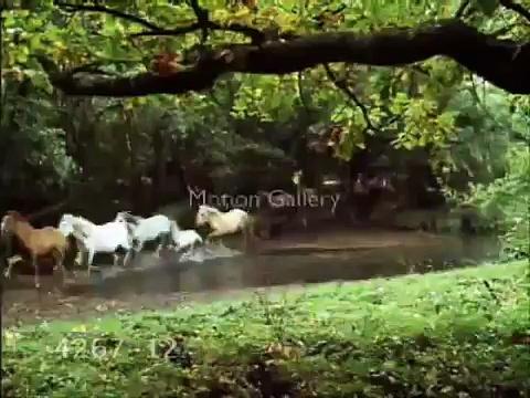 Horses – Wild horses
