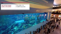 Worlds Largest Aquarium 4K - Dubai Aquarium and Underwater Zoo - Dubai Mall
