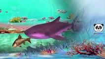 Finger Family Children Nursery Rhymes | Sharks Cartoons Finger Family Nursery Rhymes for Babies