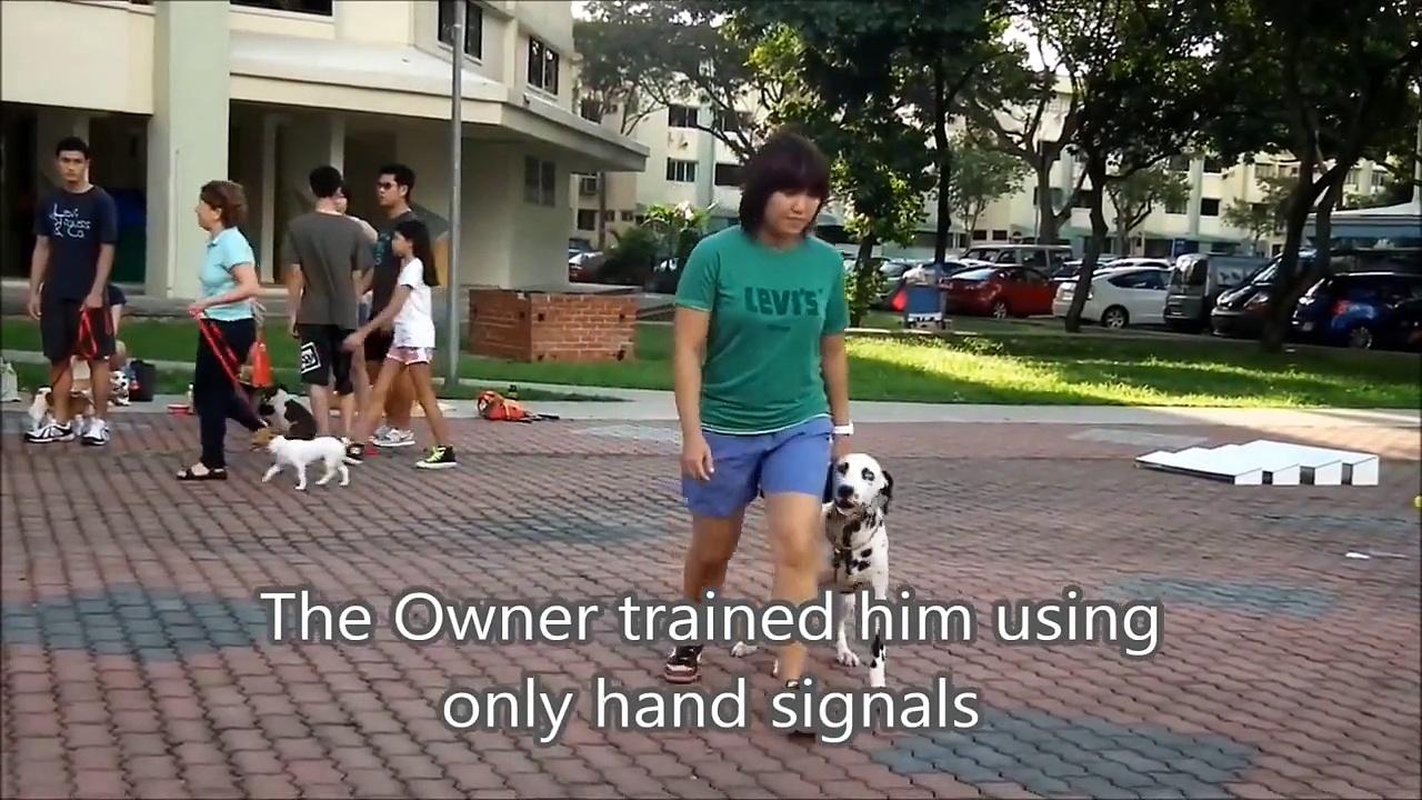 Basic dog training course – dog training video Singapore