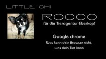 """Chi-Rocco für die Tieragentur: """"Google chrome Werbung"""""""