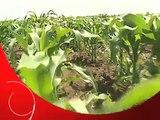 Retratos de Angola  - Agro-indústria na Humpata