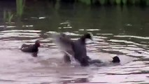 Fighting Coots: Panasonic SDR-S26