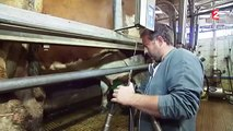 Crise des éleveurs : à la découverte du quotidien d'un éleveur laitier
