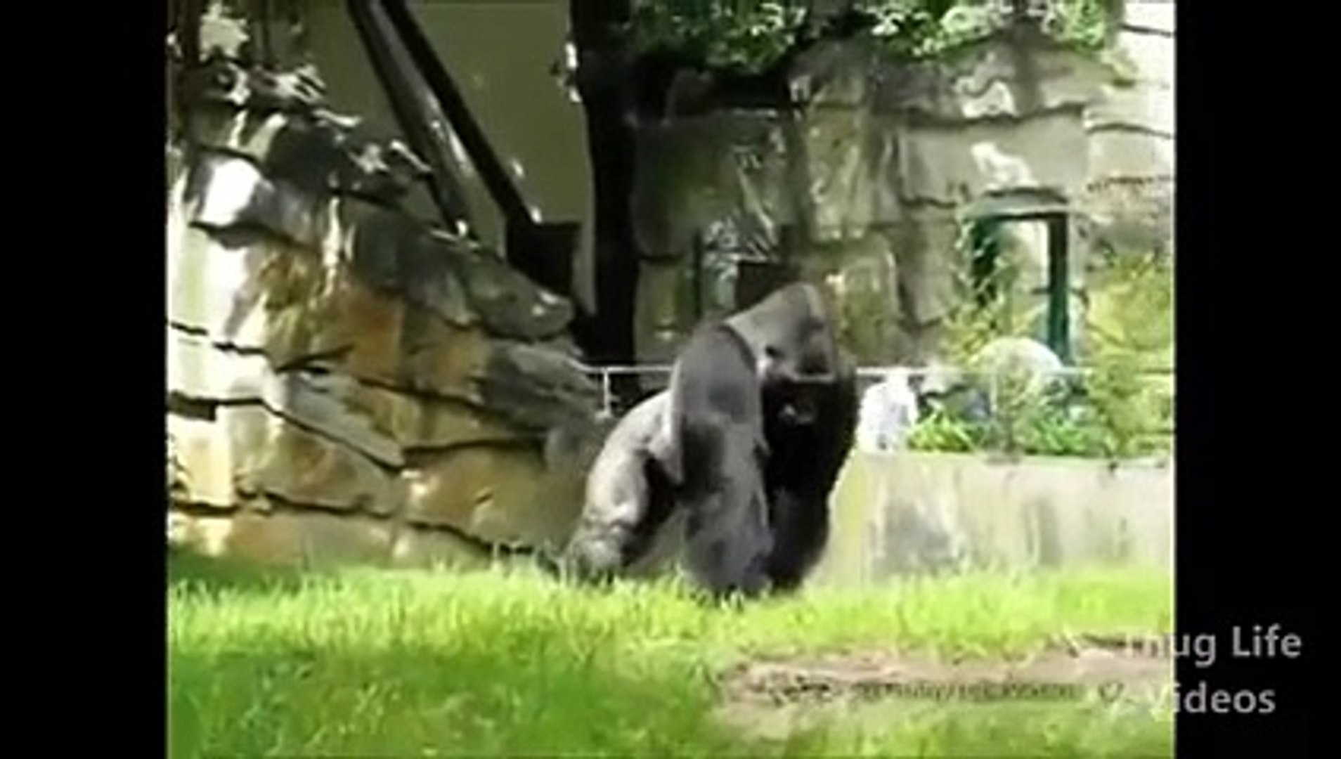 These animals lived a normal live. Until the thug life chose them ... SO much Thug!