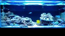 Rickets Reef - 90 Gal Day 115-122 Diatom Bloom p1