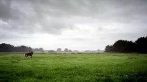 Helga, moeder in Drenthe.mp4