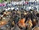 Rapa das Bestas Curro en Galicia Valga Baiona 1993