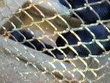 Zoo Roumanie (Resita) pauvres animaux - Loutres