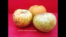 Val de Loire : pommes du verger collection du val de Baule