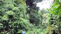 Selvatura Canopy - Tarzan Swing at Monteverde, Costa Rica