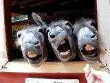 Altaf Hussain Speech & Donkeys Response - Hilarious Clip