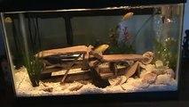 decoration artisanale d'aquarium  pour  cichlides  africain