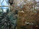 Very Tall Cactus!! (Cardon cactus)