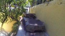 Gorriones y rolitas colombinas en mi patio