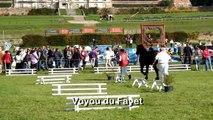 Le Cantal au Mondial du cheval Percheron 2011