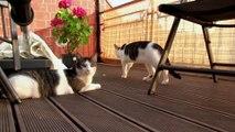 Luna und Jimmy auf dem Balkon