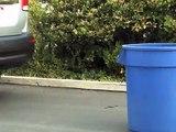 Dennis KIA - Kia Rear Parking Assist System