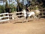 UNIPEIX CABALLOS-HORSE,CHEVAL,CAVALLO-PFERD-馬-ЛОШАДЬ-άλογο