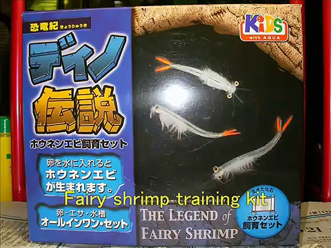 Fairy shrimp