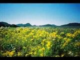 Le Parc du Bic, Bic National Park