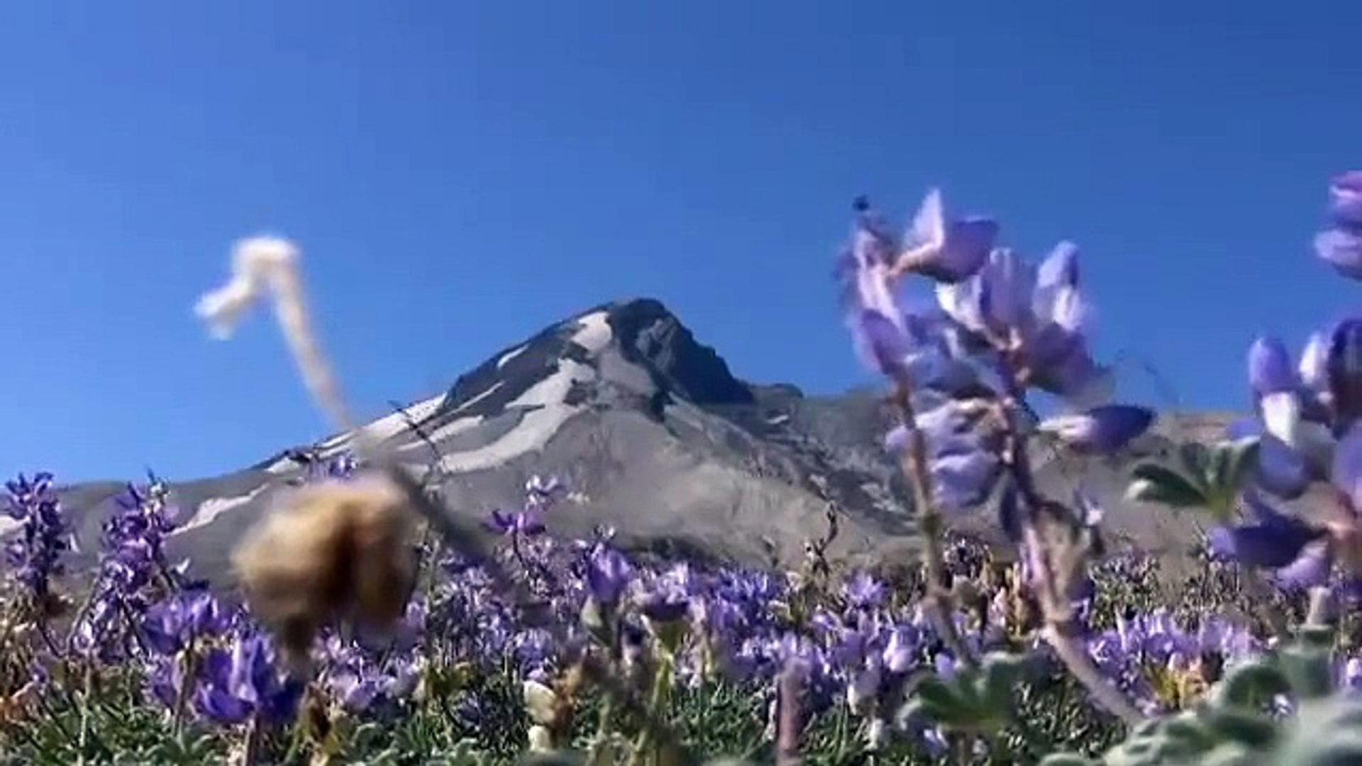 Mount St. Helens: Rising From the Ashes - Science Nation