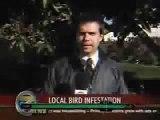 Caca de Pajaro en la Boca reportero