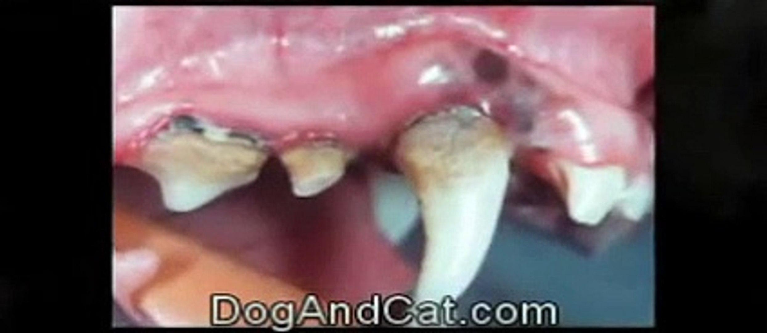 Pet Insurance | Pet Health Insurance